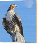 Red Tailed Hawk And Moon Wood Print by Wingsdomain Art and Photography