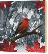 Red Wild Bird Wood Print by Debra     Vatalaro