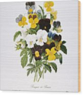 Redoute: Pansy, 1833 Wood Print by Granger