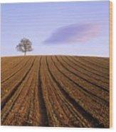 Remote Tree In A Ploughed Field Wood Print by Bernard Jaubert