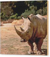 Rhino Wood Print by Steve Karol