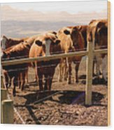 Rockies Cattle Country Wood Print by Al Bourassa