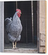 Rooster With Attitude Wood Print by Douglas Barnett