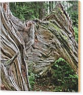 Roots - Welcome To Olympic National Park Wa Usa Wood Print by Christine Till