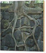 Roots And Rocks Wood Print by Douglas Barnett