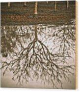 Roots Wood Print by Derek Selander