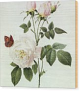 Rosa Bengale The Hymenes Wood Print by Pierre Joseph Redoute