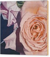 Rose Splendour Wood Print by Kerryn Madsen-Pietsch