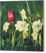 Royal Spring Wood Print by Steve Karol