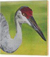 Sandhill Crane Wood Print by D Turner