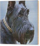 Scottish Terrier Dog Wood Print by Jennie Marie Schell