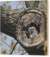 Screech Owl In A Tree Hollow Wood Print by Darlyne A. Murawski