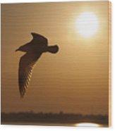 Seagull Sunset Wood Print by Dustin K Ryan