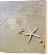 Seastars On Beach Wood Print by Mary Van de Ven - Printscapes