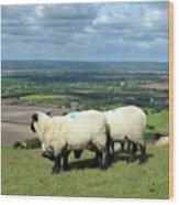 Sheep At Westbury Tor Wood Print by Kurt Van Wagner