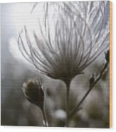 Shimmering Flower I Wood Print by Ray Laskowitz - Printscapes