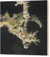 Short-headed Seahorse Juevinile Wood Print by James Forte