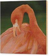 shy Wood Print by Gaby Swanson