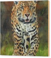 South American Jaguar Wood Print by David Stribbling