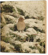 Sparrow In Winter II - Textured Wood Print by Angie Tirado