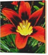 Spring Flower Wood Print by Joyce Woodhouse