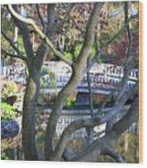 Springtime Bridge Through Japanese Maple Tree Wood Print by Carol Groenen