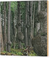 Spruce Burls Olympic National Park Wa Wood Print by Christine Till