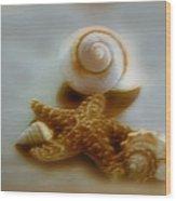 Star And Shells Wood Print by Linda Sannuti