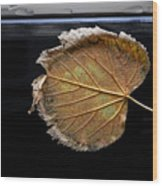 Stuck On You Wood Print by Robert Ullmann