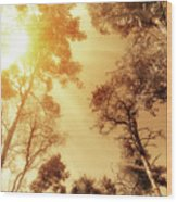Sunlit Tree Tops Wood Print by Wim Lanclus