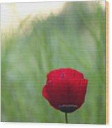 Sunset Poppy Wood Print by Julia Bridget Hayes