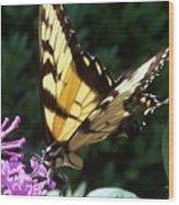 Swallowtail 2 Wood Print by Anna Villarreal Garbis