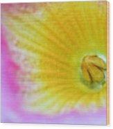 The Pandorea Vine Close Up Wood Print by Ryan Kelly