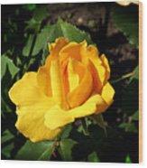 The Yellow Rose Of Garden Wood Print by Tom Buchanan