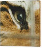 Tiger Behind Bars Wood Print by Melody Watson