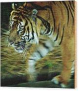 Tiger Burning Bright Wood Print by Rebecca Sherman