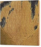 Tigers Eye Wood Print by Laurie Bath