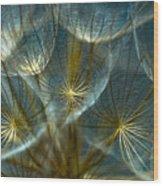 Translucid Dandelions Wood Print by Iris Greenwell