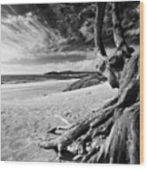 Tree Roots Carmel Beach Wood Print by George Oze