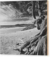 Tree Roots Carmel Beach Wood Print by George Oze