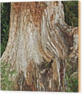 Trees On The Trails - Olympic National Park Wa Wood Print by Christine Till