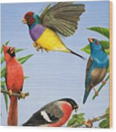 Tropical Birds Wood Print by RB Davis