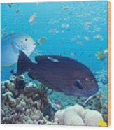 Tropical Reef Fish Wood Print by Georgette Douwma