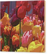 Tulip Confusion Wood Print by Sharon Talson