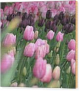 Tulip Dreams Wood Print by Louise Magno
