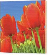 Tulip Field Wood Print by Giancarlo Liguori