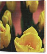 Tulips Wood Print by Matt Truiano