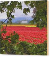 Tulips Secret Window Wood Print by Louise Magno