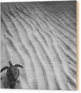 Turtle Ridge Wood Print by Sean Davey