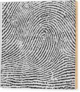Typical Loop Pattern, 1900 Wood Print by Science Source
